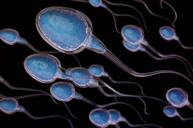 nível de fragmentação de dna de espermatozoides